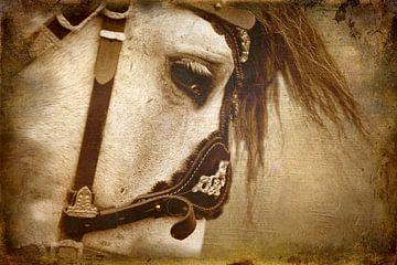 Stallion sur Wybrich Warns