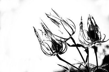 Les Jardins D'eau 13 von Esther Swaager ( Studio Toet)