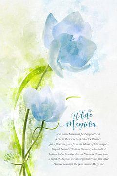 Witte magnolia van Theodor Decker