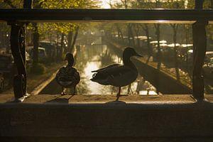 Natuur in de stad (Edam)