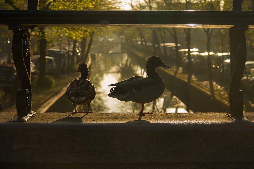Natuur in de stad (Edam) van Marianne Jonkman