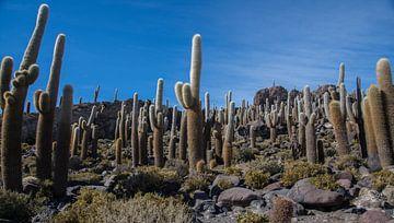 Cactuseiland in een zoutmeer gelegen in Bolivia. van Tanja de Mooij