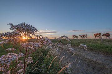 Koeien op de dijk bij zonsondergang van Moetwil en van Dijk - Fotografie