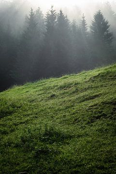 Zomer in het bos van Martin Wasilewski