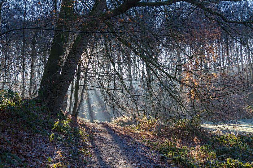 Berg en Dal, Nederland #2 van DuFrank Images