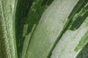Abstract groen blad van ElkeS Fotografie