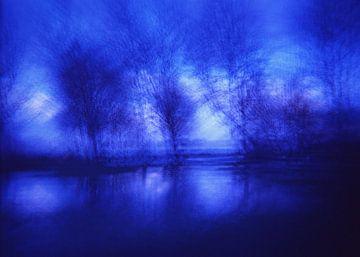 mystiek bos van Karel Ham