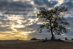 Sonnenaufgang Loonse und Drunense Dünen von Rossum-Fotografie