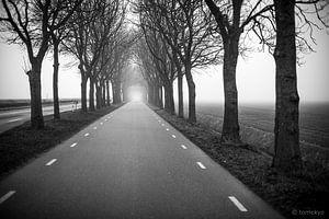 bomen van Tomek Kepa