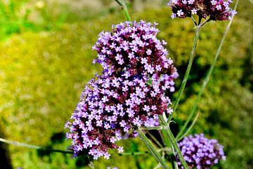 Bloemen & planten von Stef De Vos
