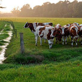 Cows party sur Robert Smink
