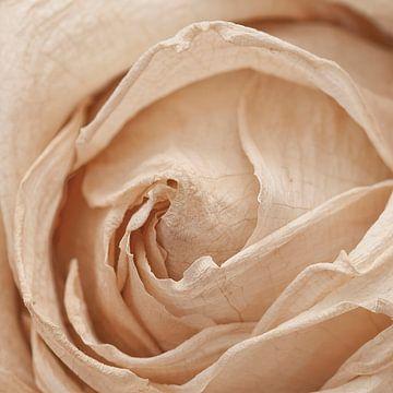 Macro van een gedroogde roos van Annavee
