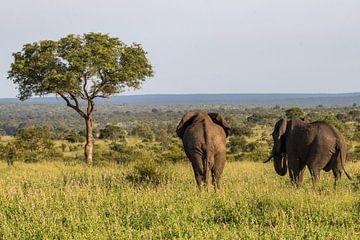 Olifanten op de Savanna van Marijke Arends-Meiring