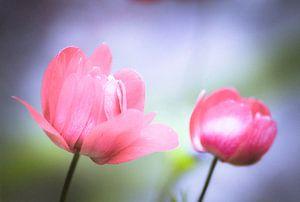 Voorjaarsbloemen met zachte kleuren van Marga Meesters