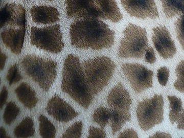 Close up van giraffe billen van Petra Dielman