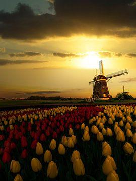 Niederländischer Frühling Sonnenuntergang auf den Windmühlen und die Tulpen von Digikhmer