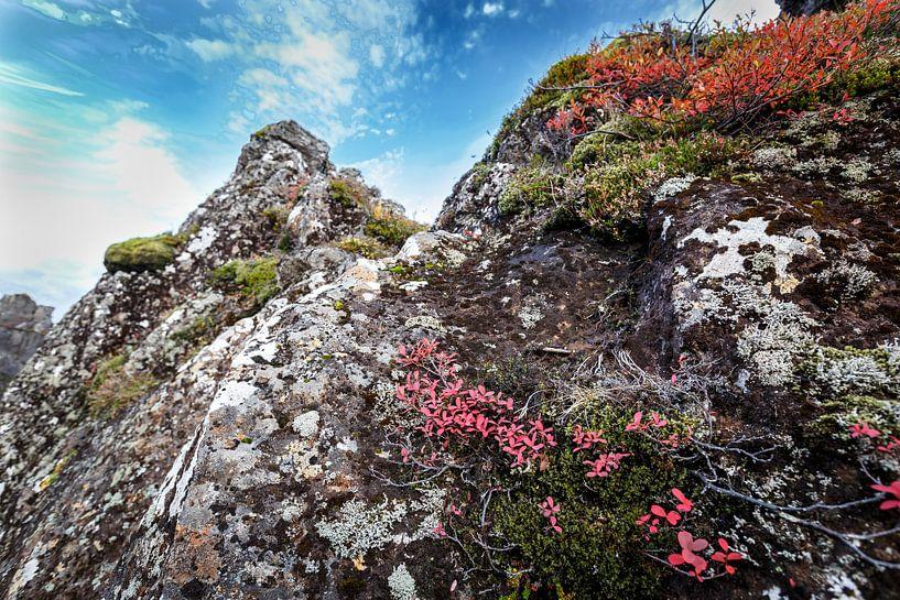 Herfst kleuren von John Groen