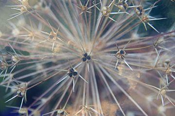 Allium/Sierui macro bloemen van