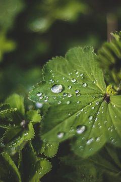 Regentropfen von Yara Verstappen