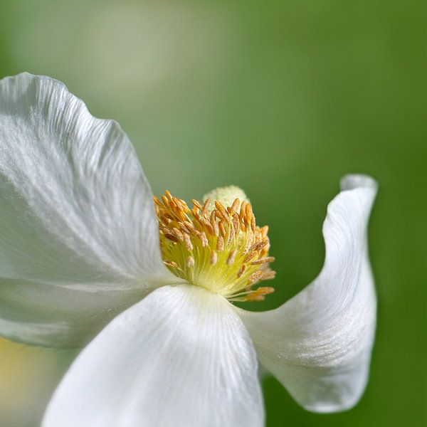 Blumentanz  van Violetta Honkisz