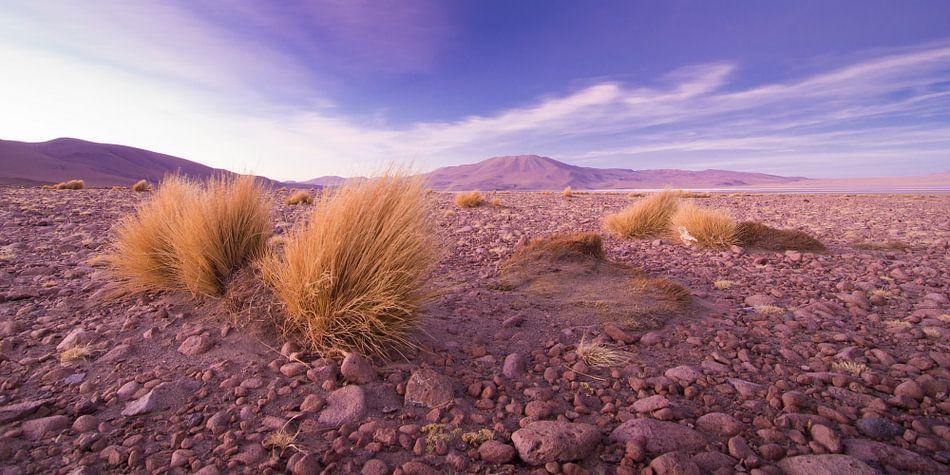 Desert sunset van Jelmer Jeuring