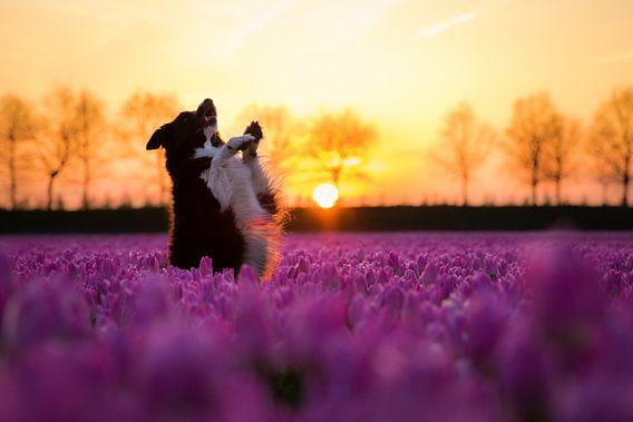 Fenna poseert bij de tulpen van Pieter Bezuijen