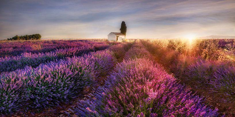 Lavendelveld in de Provence in Frankrijk in het ochtendlicht. van Voss Fine Art Fotografie