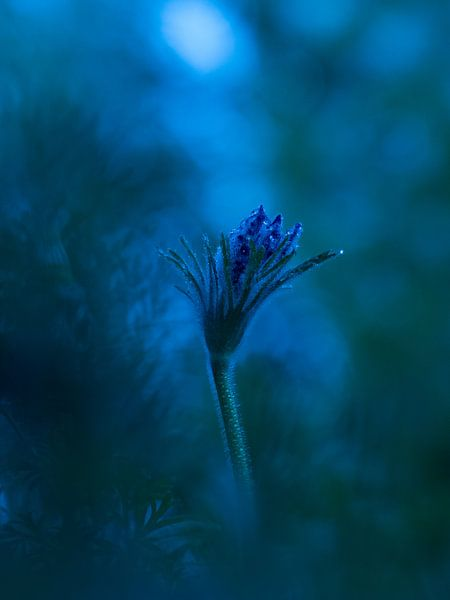 Bloem Wildemanskruid van bird bee flower and tree