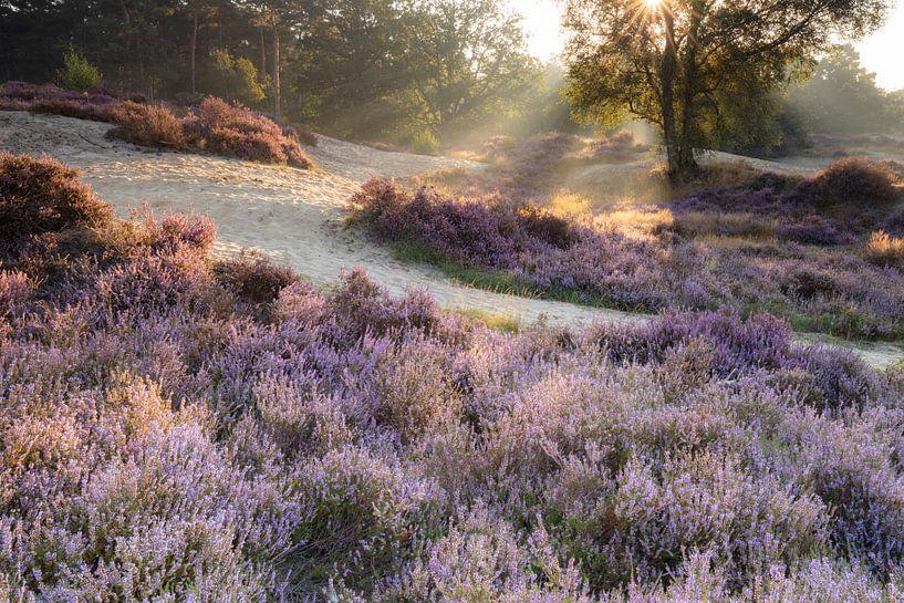 Heidelandschap Lievensberg, Noord-Brabant van Teuni's Dreams of Reality