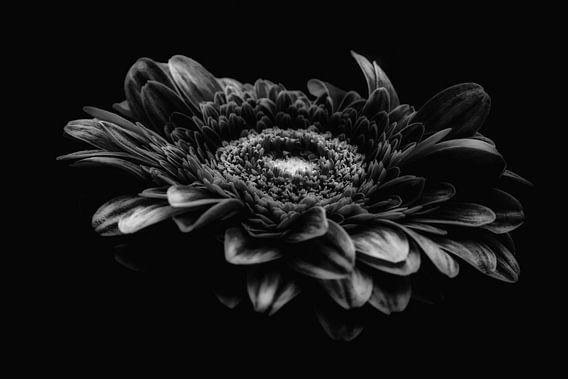 Gerbera zwart-wit  van Angela Wouters