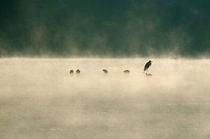Reiger in de mist van