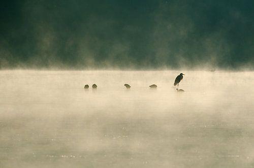 Reiger in de mist