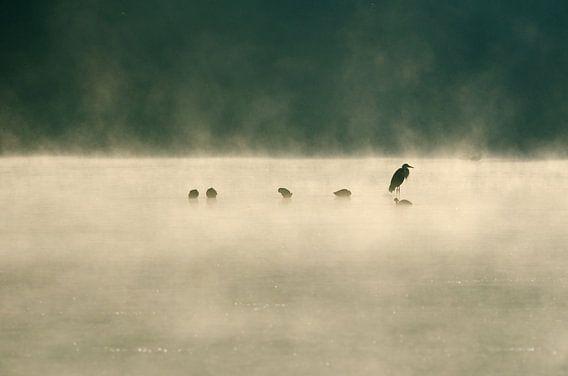 Reiger in de mist van Marcel Pietersen