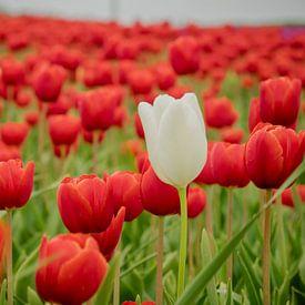 Rood tulpenveld van Martijn Tilroe