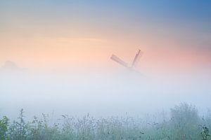 In the fog