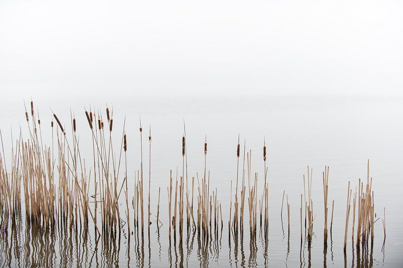 Reed sur Wim Slootweg