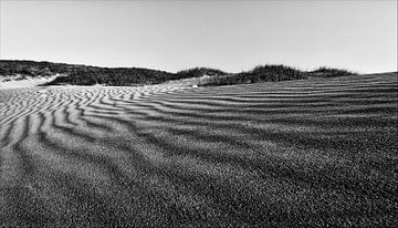 Duinen Noord Holland van Ron Hoefs