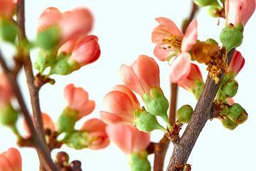 Roze bloesem van Jenco van Zalk