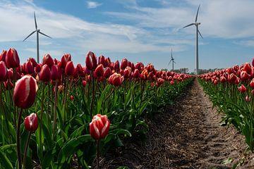 Rode tulpen in een tulpenveld in Noord Holland met moderne windturbines in de achtergrond van Anges van der Logt