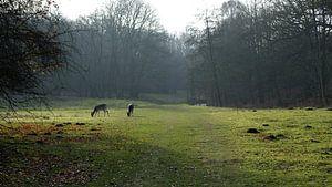 Hertjes in het bos van