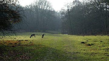 Hertjes in het bos van Frank de Ridder