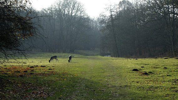Hertjes in het bos