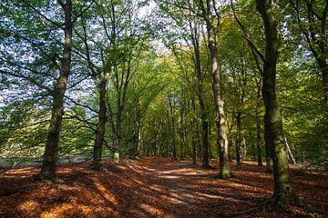 Bos op een zonnige dag van Nel Diepstraten
