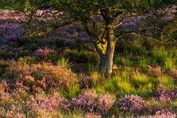 Heide scene van Luuk Belgers