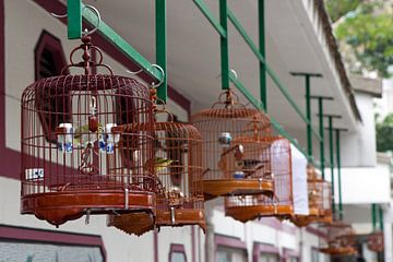 Hong Kong Vogelmarkt van t.ART