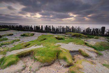 Vegetated mud flats along the Dutch Wadden coast sur