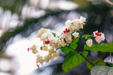 orchidee 1 von John van Weenen