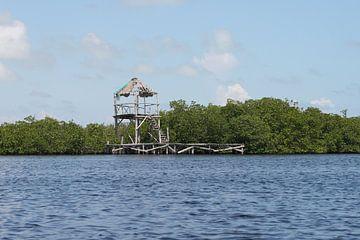 mangrove van Barry van Strien