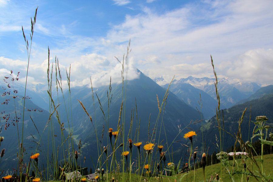 Alpenweide van Henk de Groot