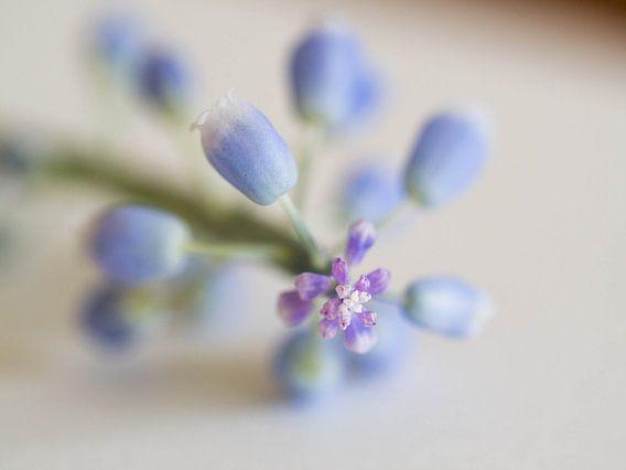 Blauw druifje van Cindy Arts